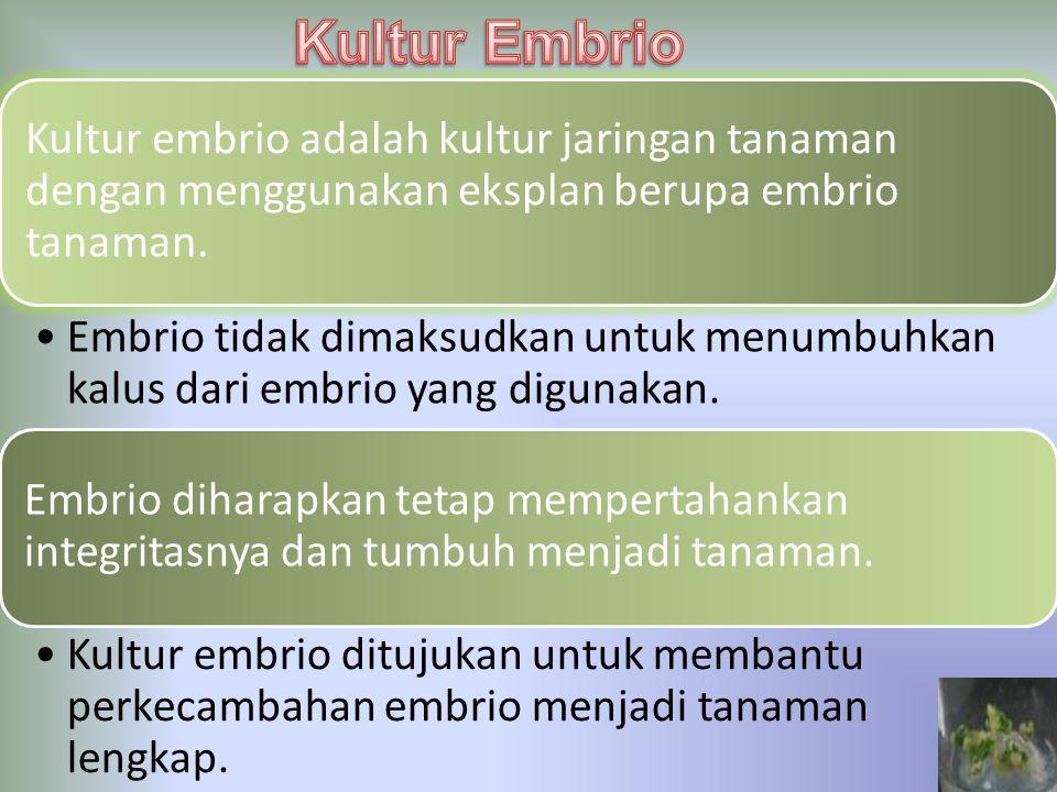 Kultur Embrio Kultur embrio adalah kultur jaringan tanaman dengan menggunakan eksplan berupa embrio tanaman.