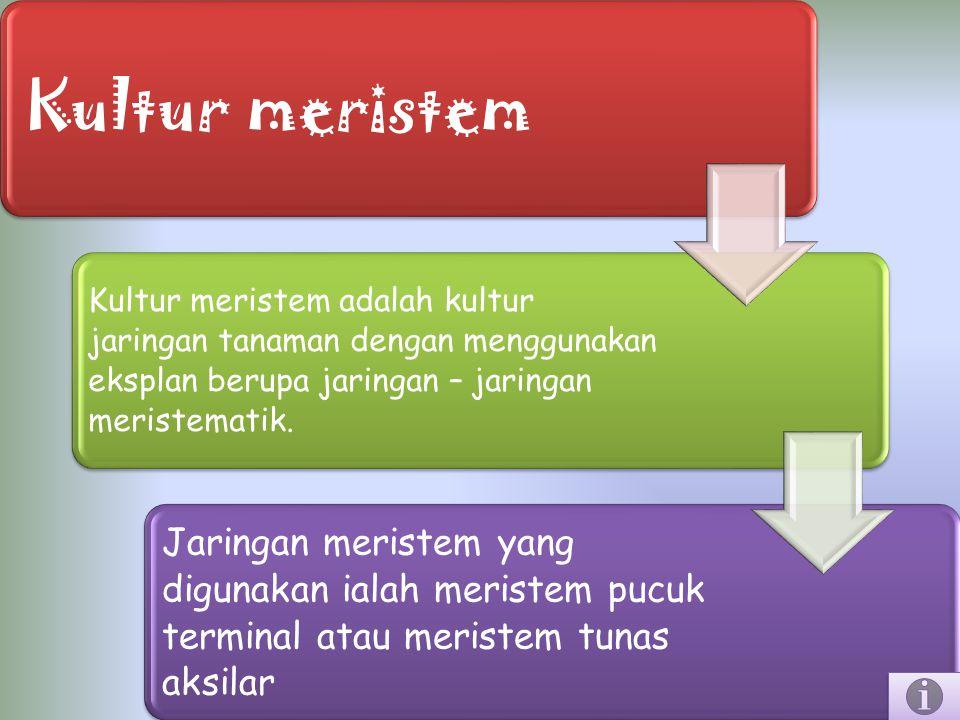 Kultur meristem Kultur meristem adalah kultur jaringan tanaman dengan menggunakan eksplan berupa jaringan – jaringan meristematik.