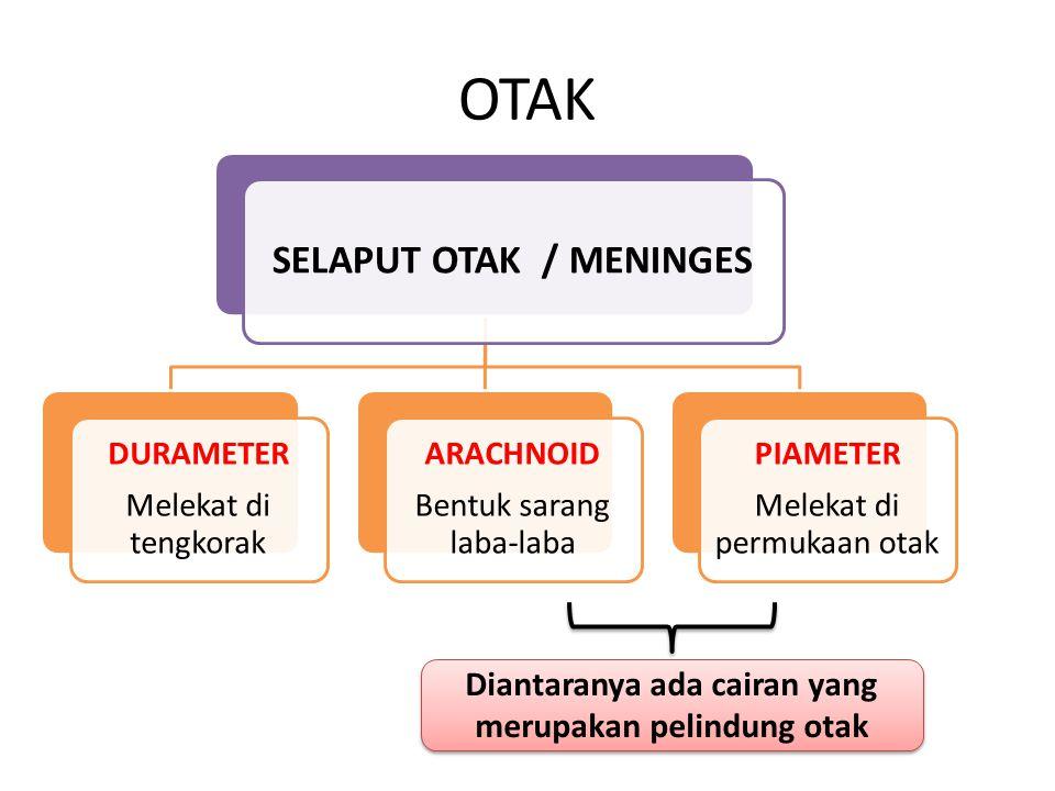 SELAPUT OTAK / MENINGES