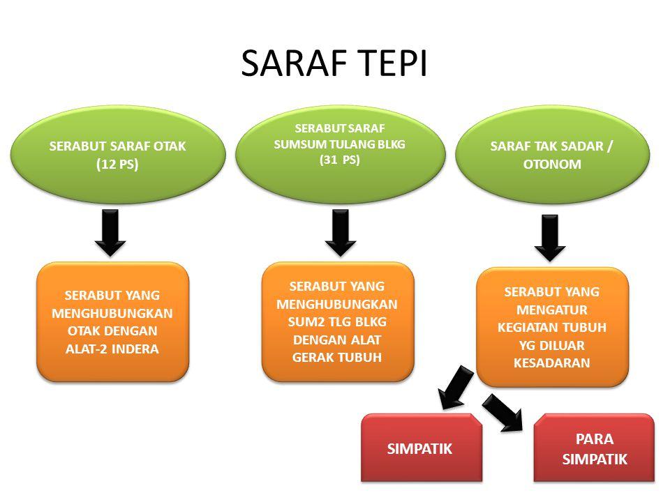 SARAF TEPI PARA SIMPATIK SIMPATIK SERABUT SARAF OTAK (12 PS)