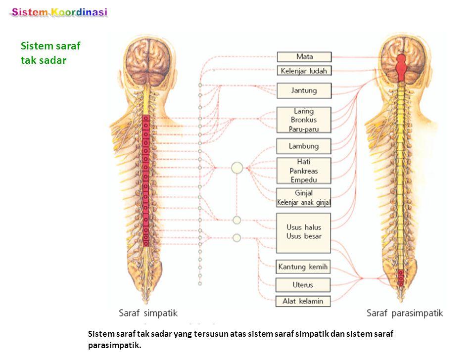 Sistem Koordinasi Sistem saraf tak sadar