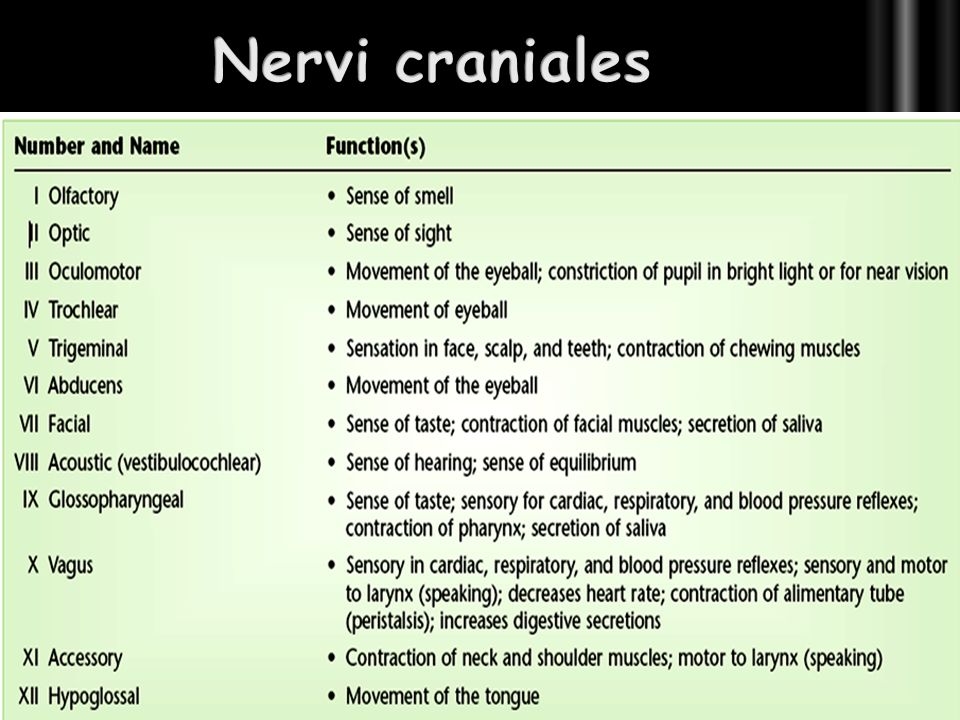 Nervi craniales