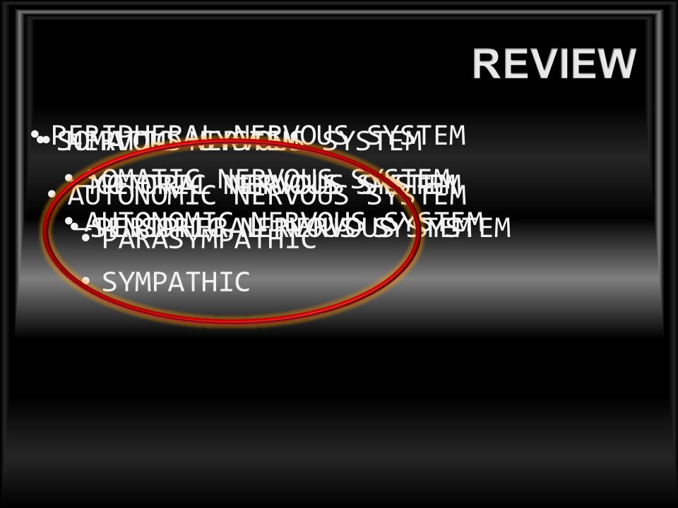 REVIEW PERIPHERAL NERVOUS SYSTEM SOMATIC NERVOUS SYSTEM