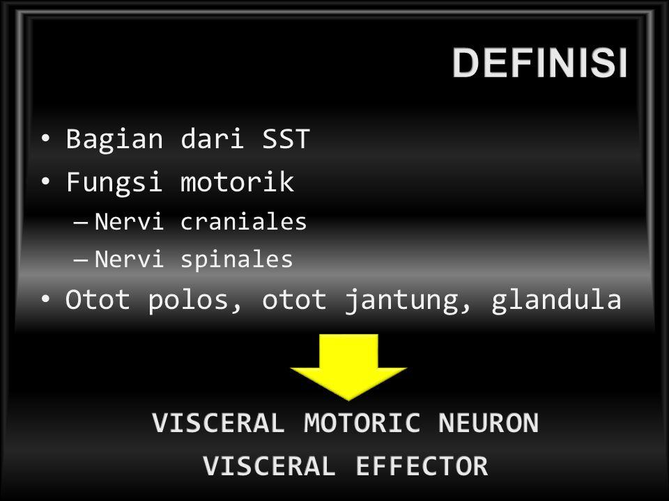 VISCERAL MOTORIC NEURON