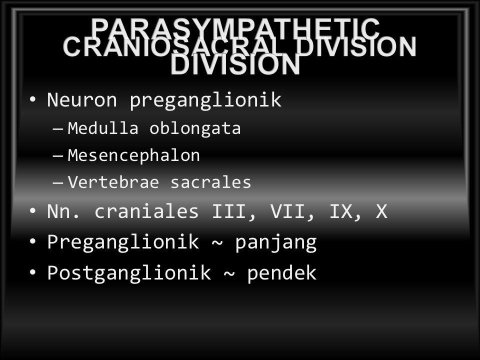 CRANIOSACRAL DIVISION