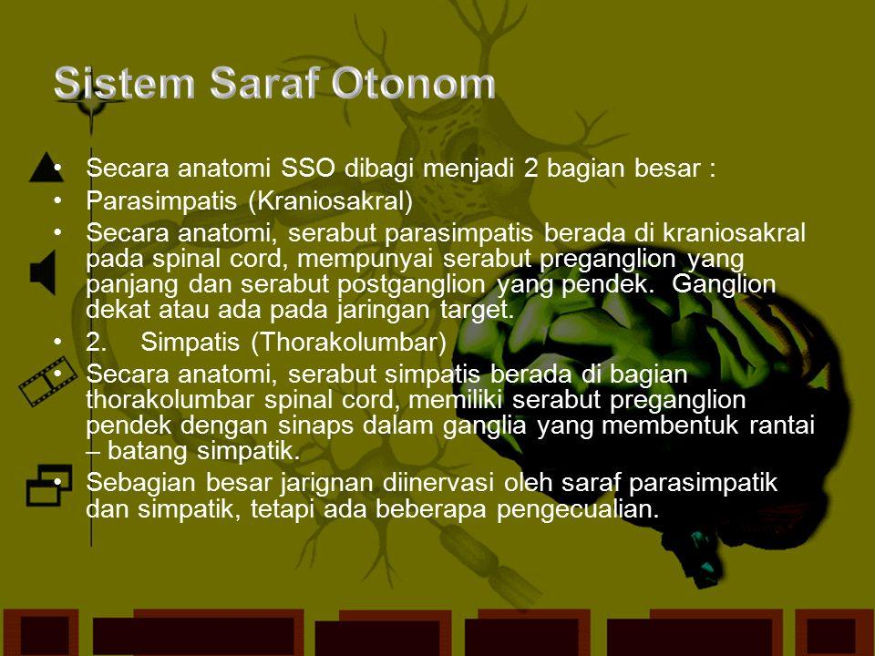 Sistem Saraf Otonom Secara anatomi SSO dibagi menjadi 2 bagian besar :