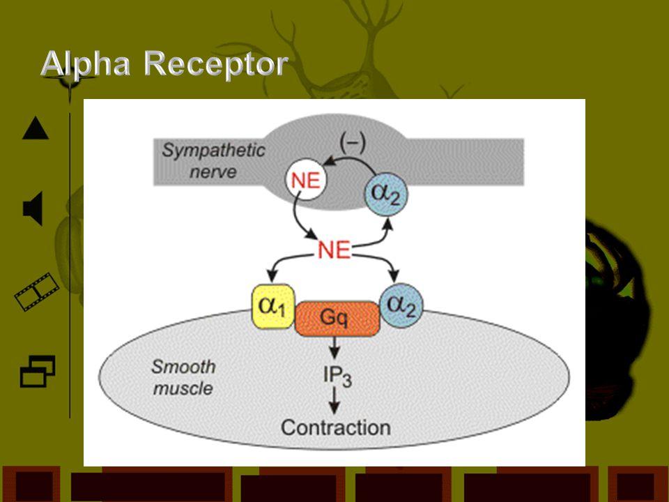 Alpha Receptor