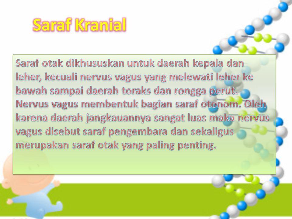 Saraf Kranial
