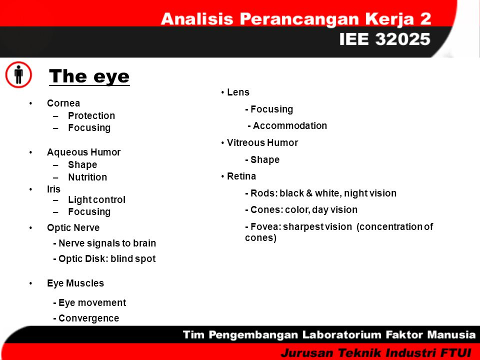 The eye Lens - Focusing Cornea - Accommodation Protection Focusing