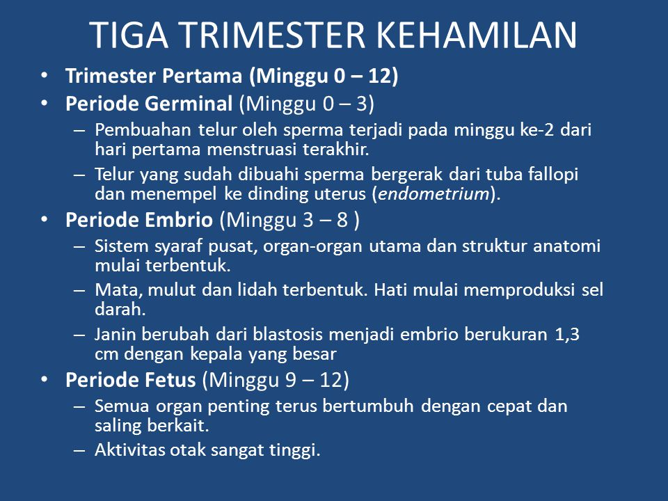 TIGA TRIMESTER KEHAMILAN