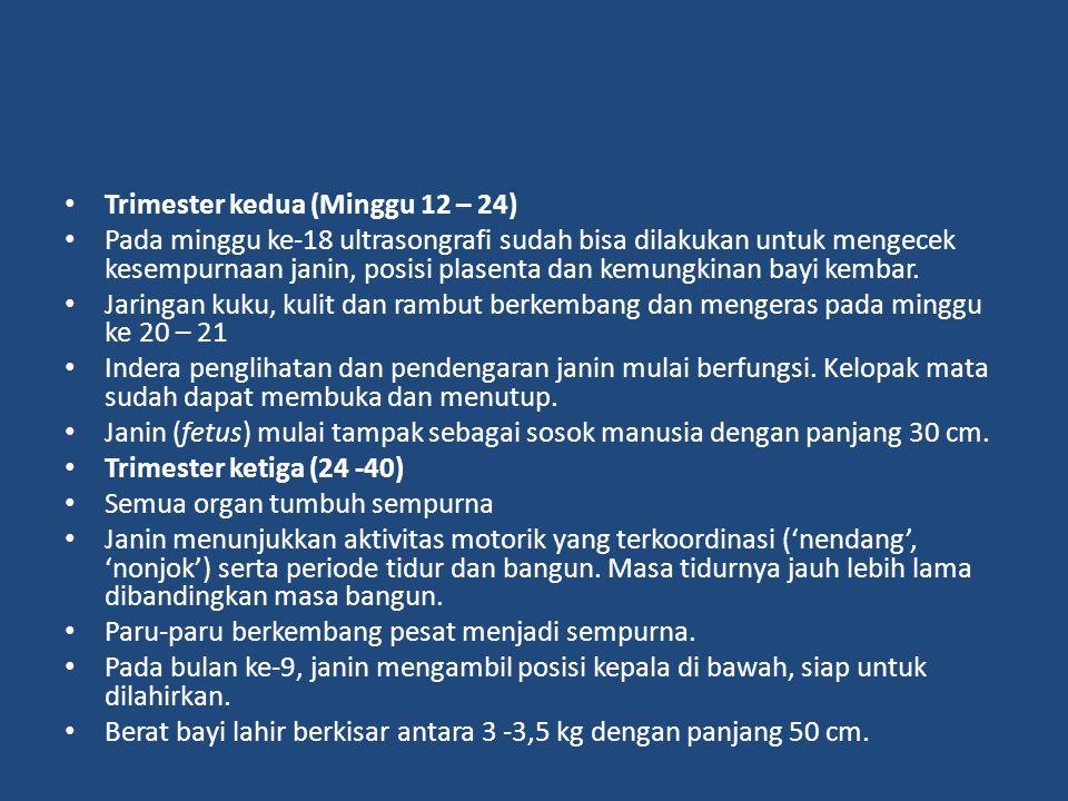 Trimester kedua (Minggu 12 – 24)