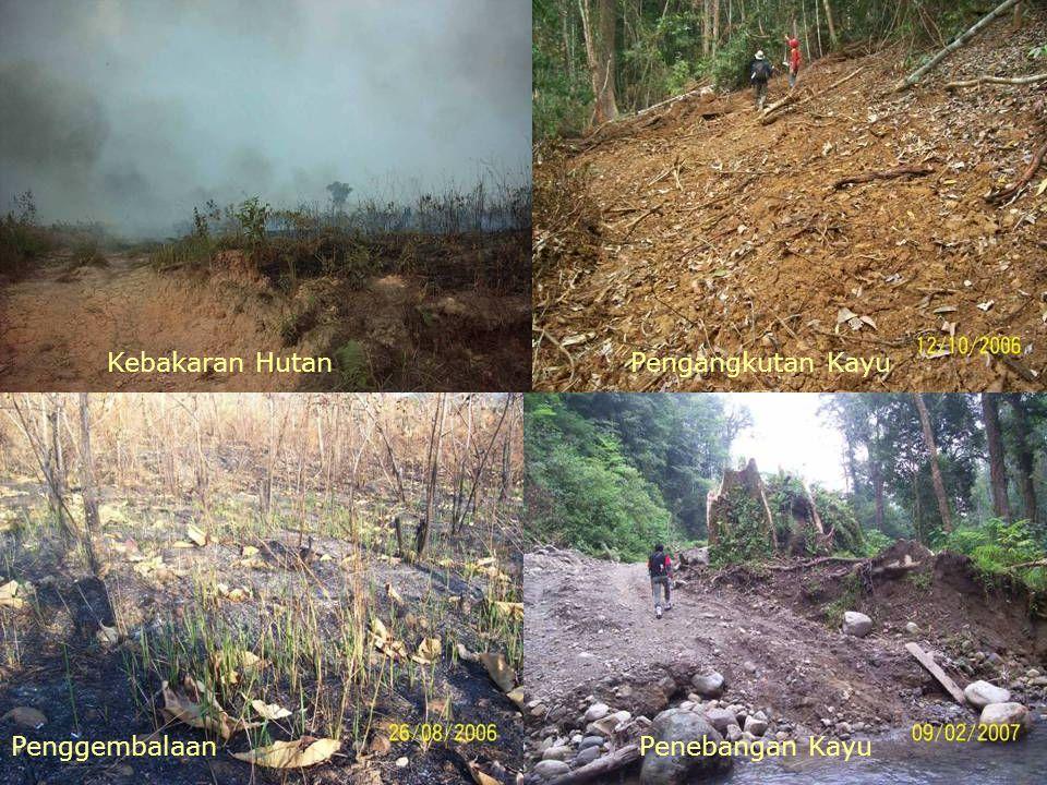 Kebakaran Hutan Pengangkutan Kayu