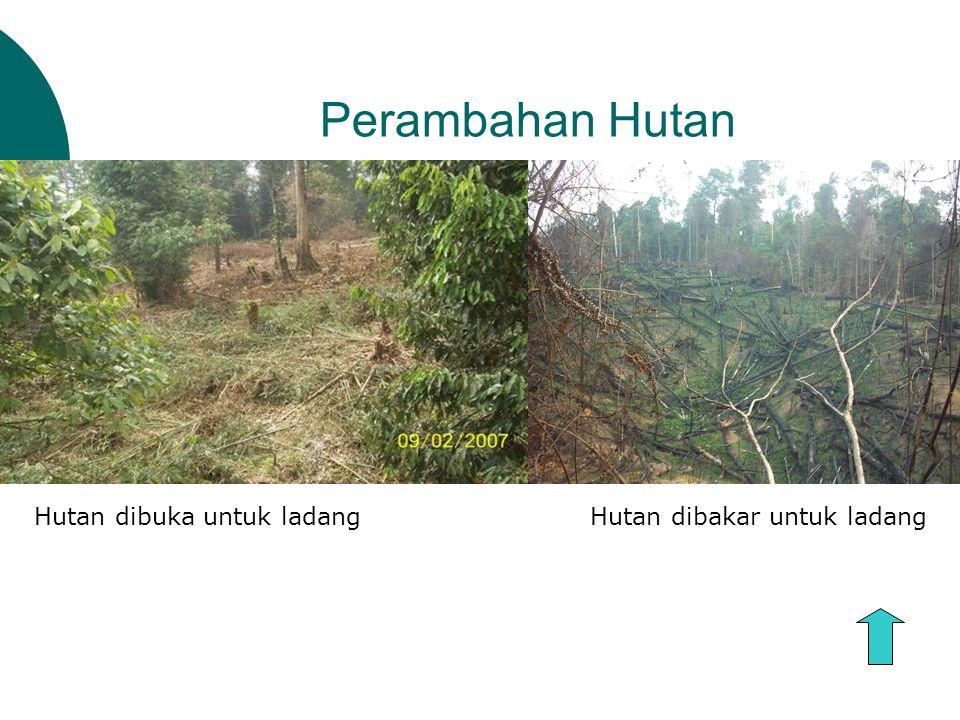 Perambahan Hutan Hutan dibuka untuk ladang Hutan dibakar untuk ladang