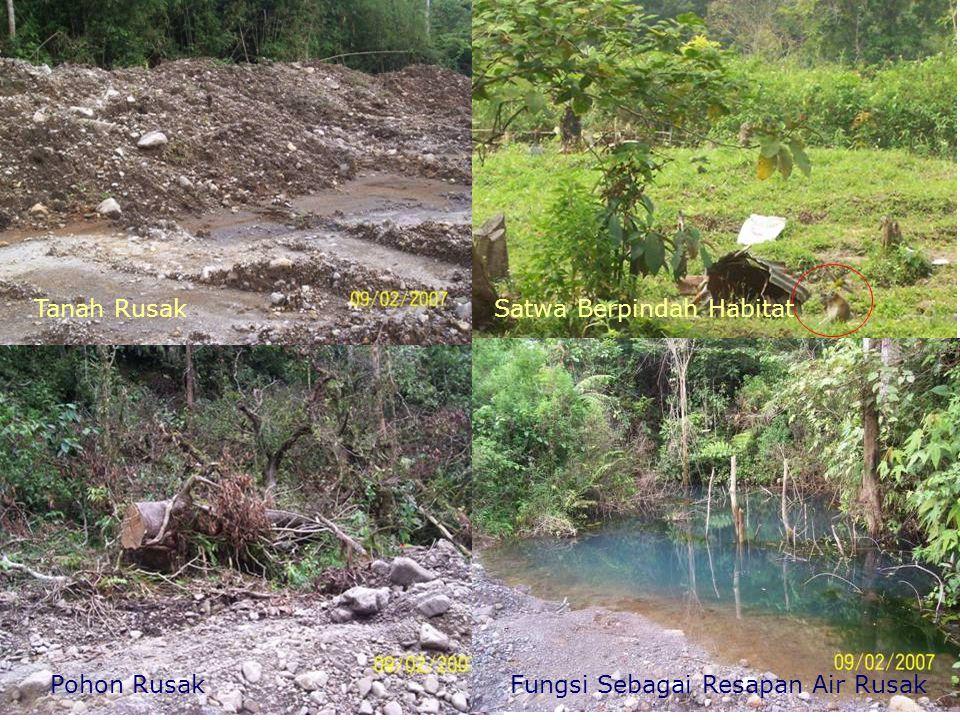 Tanah Rusak Satwa Berpindah Habitat