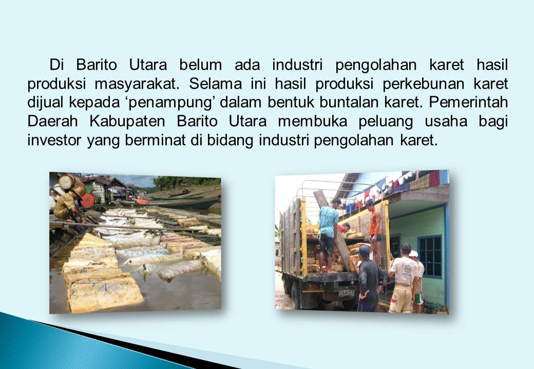 Di Barito Utara belum ada industri pengolahan karet hasil produksi masyarakat.