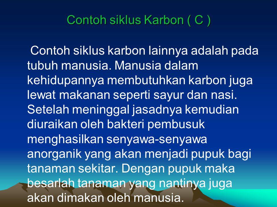 Contoh siklus Karbon ( C )