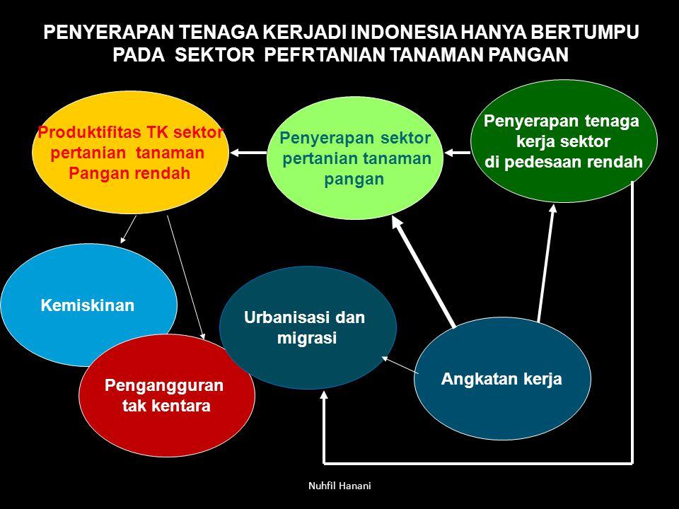 Produktifitas TK sektor