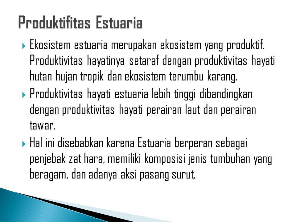 Produktifitas Estuaria
