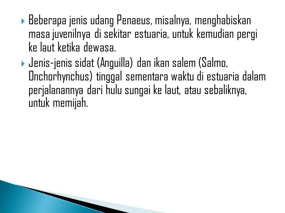 Beberapa jenis udang Penaeus, misalnya, menghabiskan masa juvenilnya di sekitar estuaria, untuk kemudian pergi ke laut ketika dewasa.