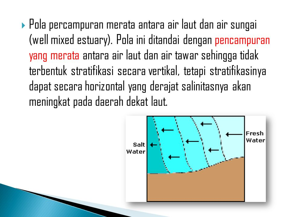 Pola percampuran merata antara air laut dan air sungai (well mixed estuary).
