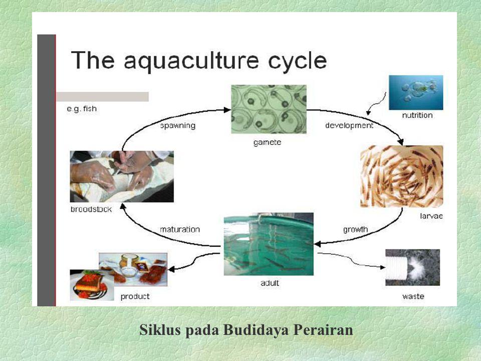Siklus pada Budidaya Perairan