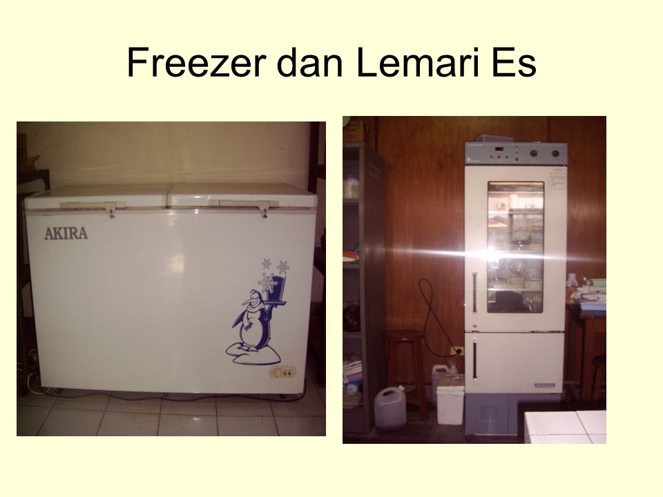 Freezer dan Lemari Es