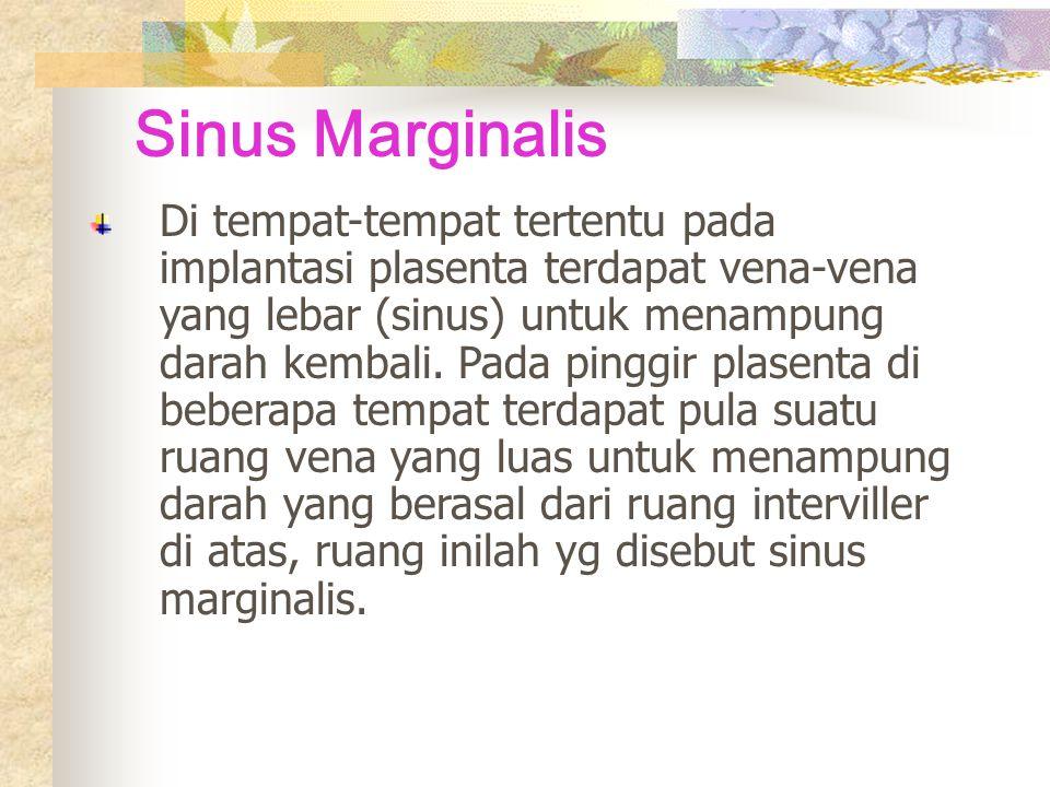 Sinus Marginalis