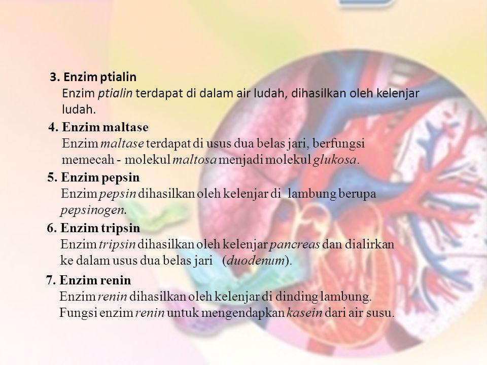 3. Enzim ptialin Enzim ptialin terdapat di dalam air ludah, dihasilkan oleh kelenjar. ludah. 4. Enzim maltase.