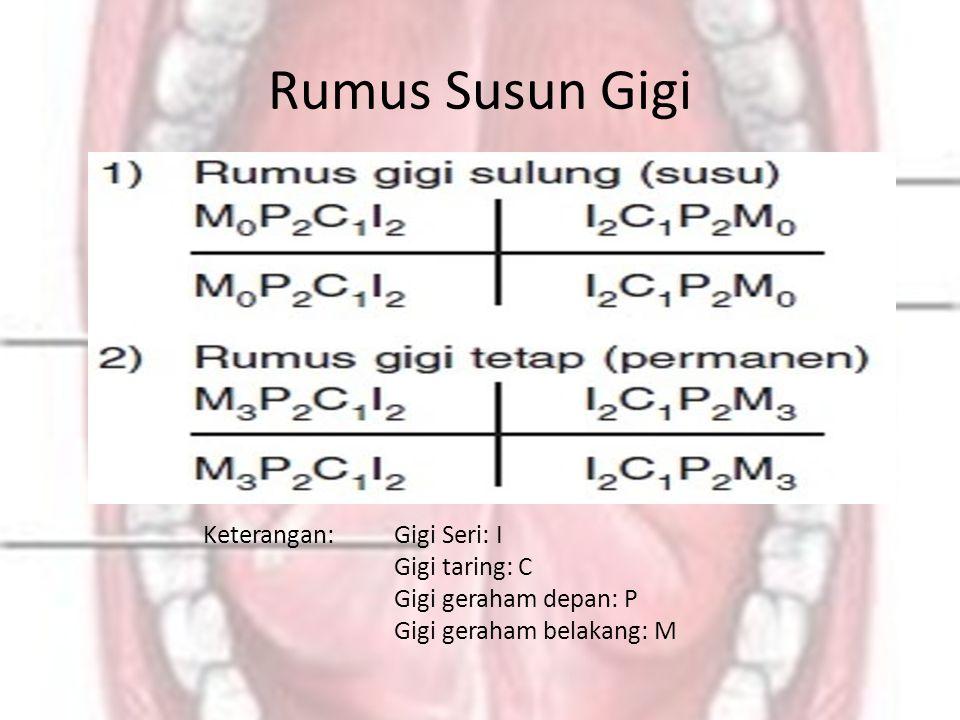 Rumus Susun Gigi Keterangan: Gigi Seri: I Gigi taring: C