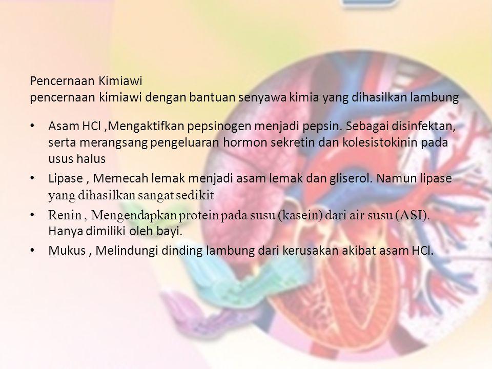 Pencernaan Kimiawi pencernaan kimiawi dengan bantuan senyawa kimia yang dihasilkan lambung.
