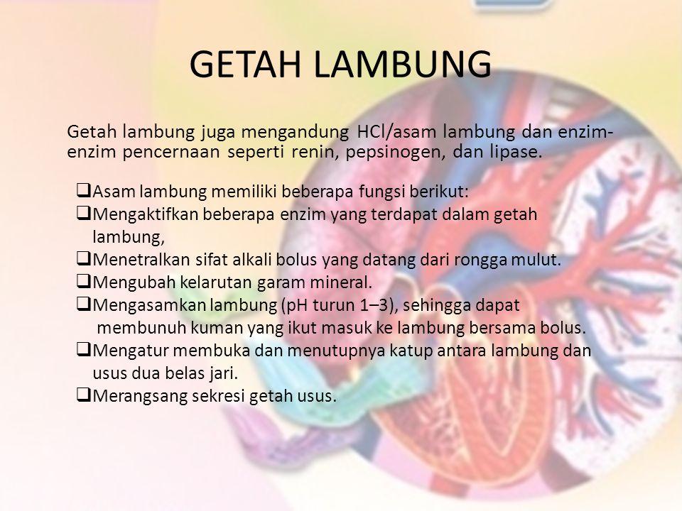 GETAH LAMBUNG Getah lambung juga mengandung HCl/asam lambung dan enzim-enzim pencernaan seperti renin, pepsinogen, dan lipase.