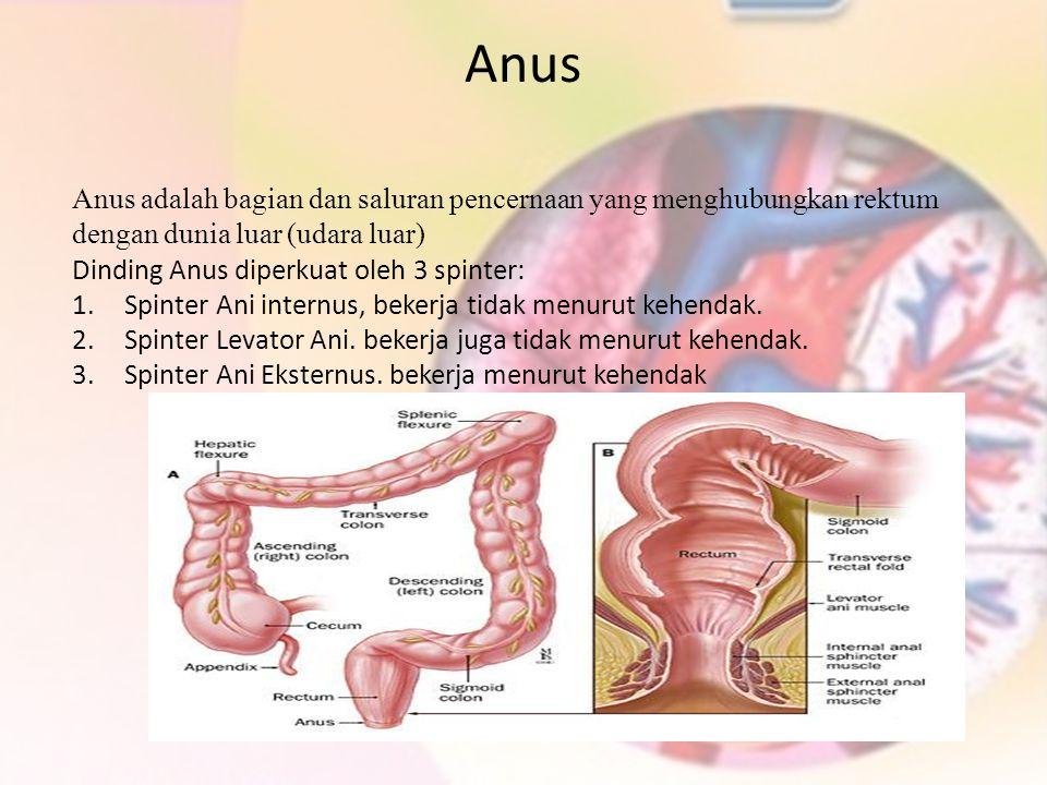 Anus Anus adalah bagian dan saluran pencernaan yang menghubungkan rektum dengan dunia luar (udara luar)