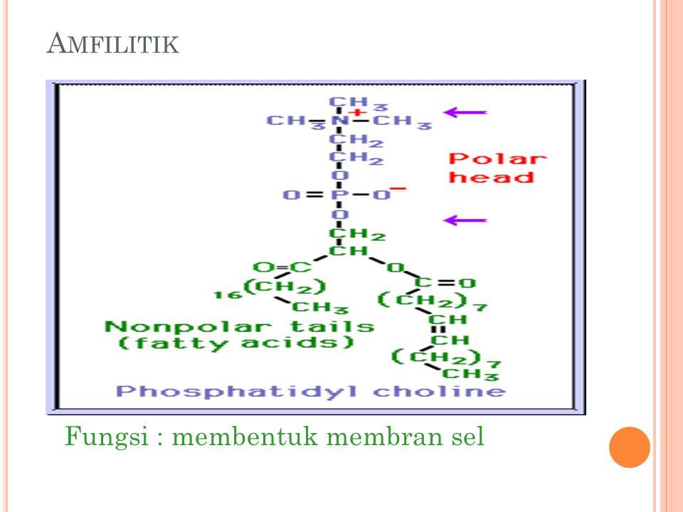 Amfilitik Fungsi : membentuk membran sel