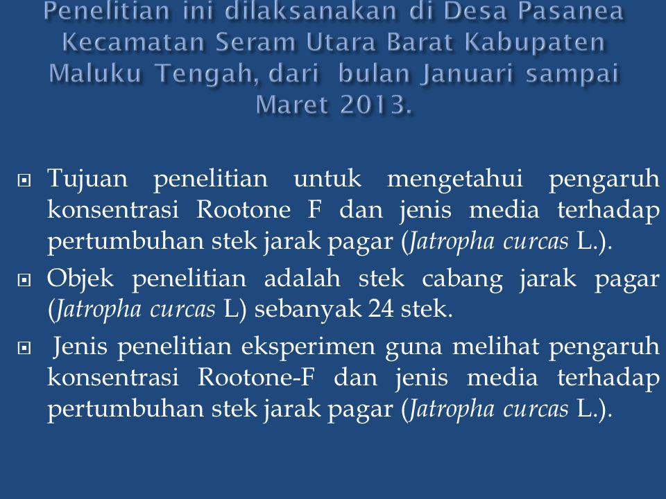 Penelitian ini dilaksanakan di Desa Pasanea Kecamatan Seram Utara Barat Kabupaten Maluku Tengah, dari bulan Januari sampai Maret 2013.