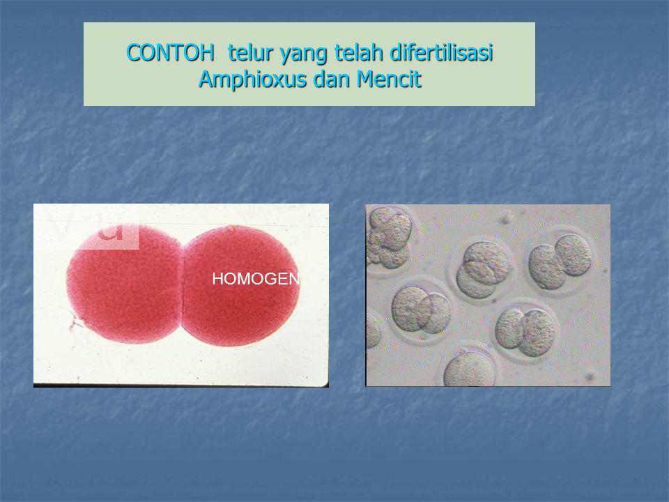 CONTOH telur yang telah difertilisasi Amphioxus dan Mencit