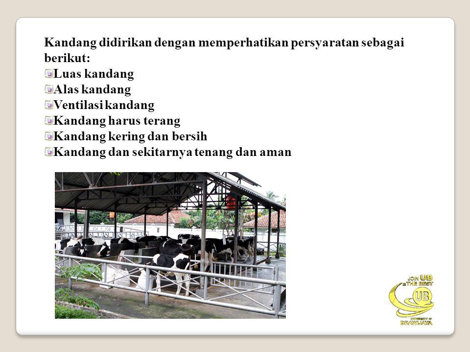 Kandang didirikan dengan memperhatikan persyaratan sebagai berikut: