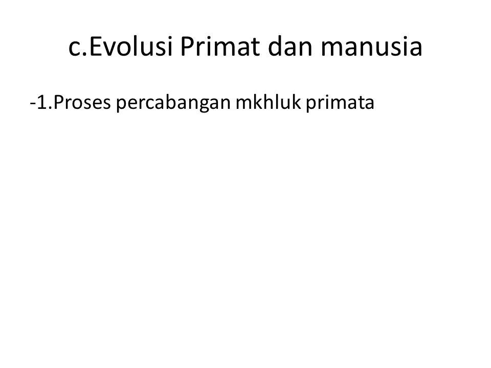 c.Evolusi Primat dan manusia