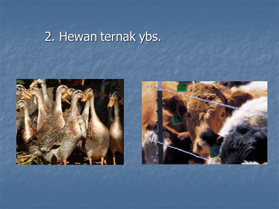 2. Hewan ternak ybs.