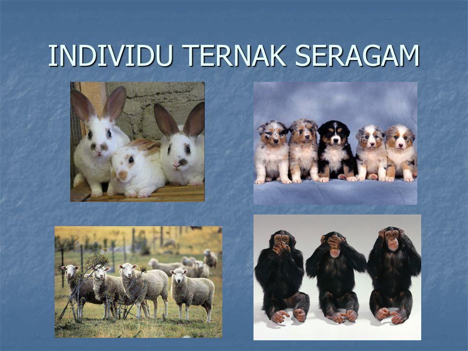 INDIVIDU TERNAK SERAGAM
