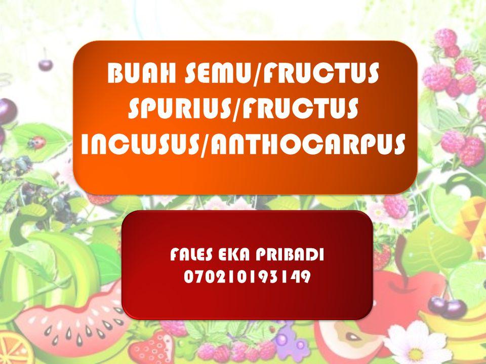 BUAH SEMU/FRUCTUS SPURIUS/FRUCTUS INCLUSUS/ANTHOCARPUS