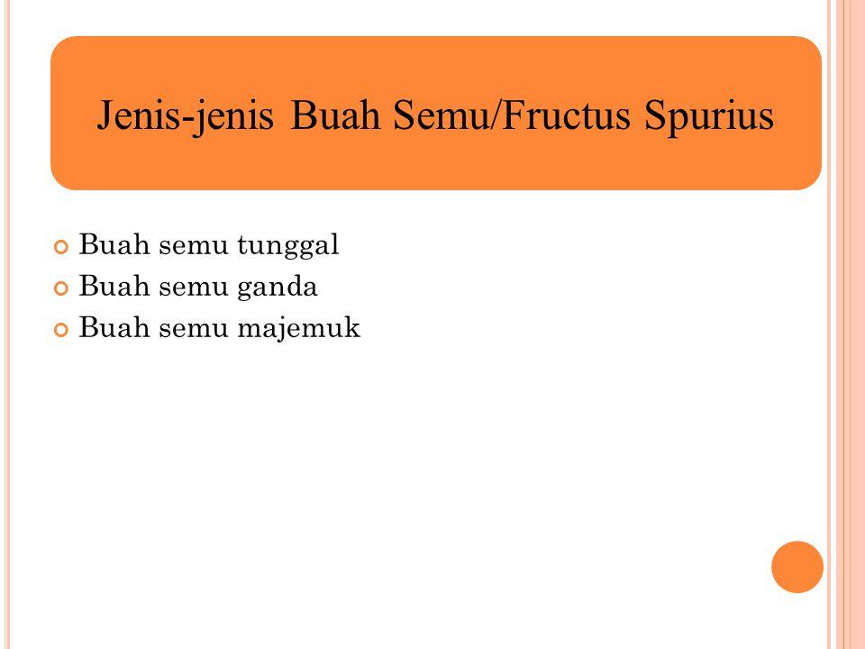 Jenis-jenis Buah Semu/Fructus Spurius