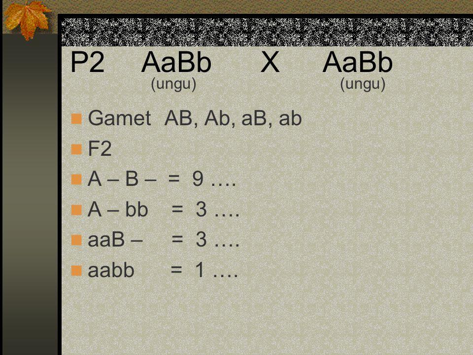 P2 AaBb X AaBb Gamet AB, Ab, aB, ab F2 A – B – = 9 …. A – bb = 3 ….