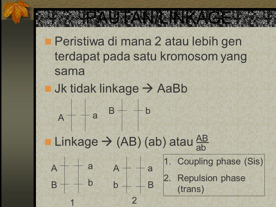 PAUTAN/LINKAGE Peristiwa di mana 2 atau lebih gen terdapat pada satu kromosom yang sama. Jk tidak linkage  AaBb.
