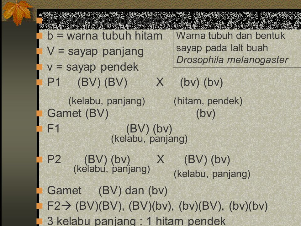 F2 (BV)(BV), (BV)(bv), (bv)(BV), (bv)(bv)