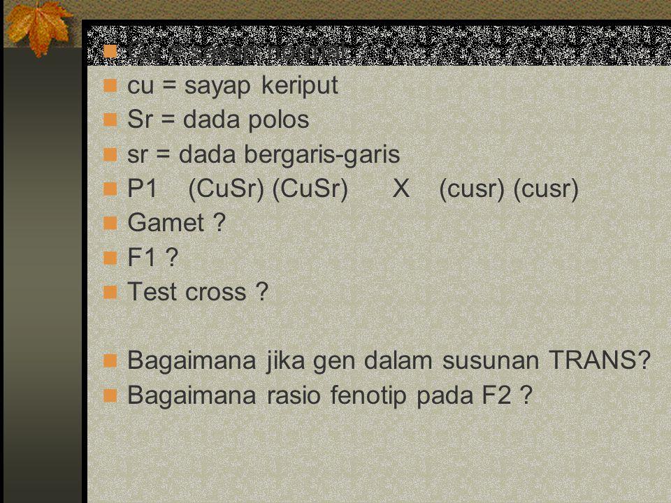 Cu = sayap normal cu = sayap keriput. Sr = dada polos. sr = dada bergaris-garis. P1 (CuSr) (CuSr) X (cusr) (cusr)