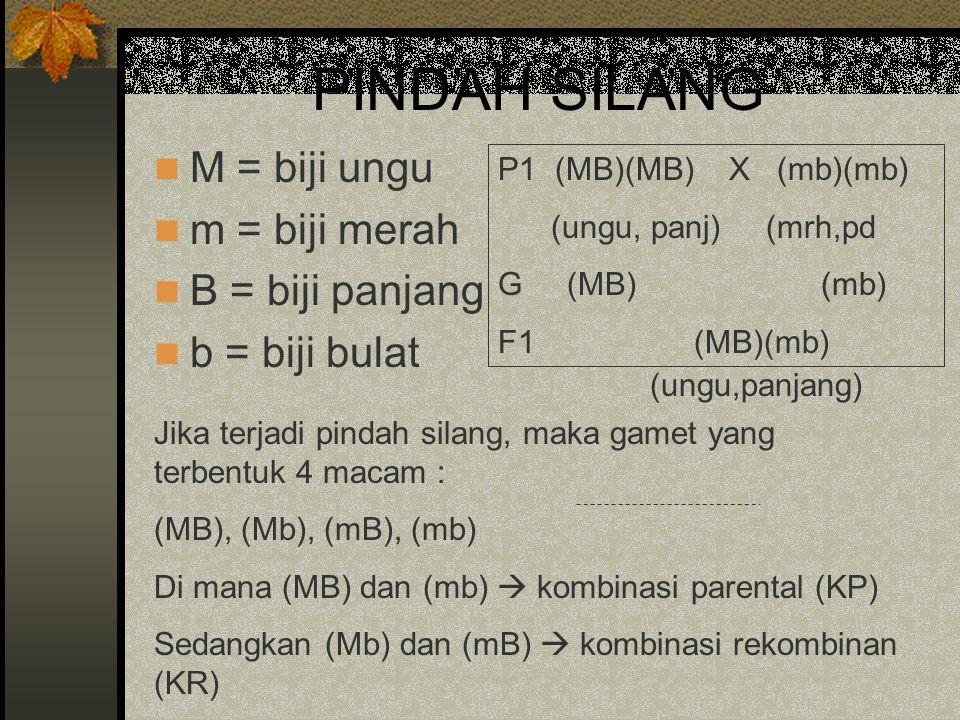 PINDAH SILANG M = biji ungu m = biji merah B = biji panjang