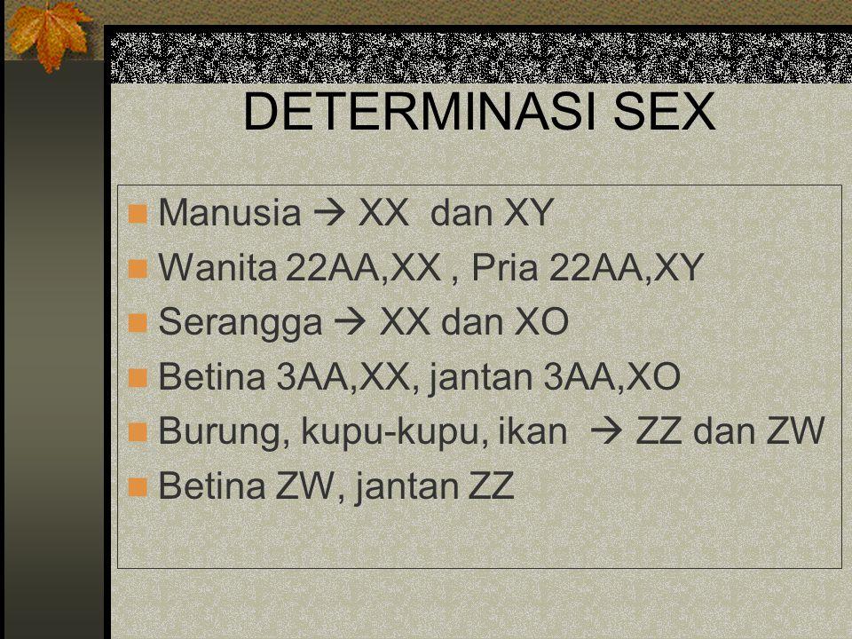 DETERMINASI SEX Manusia  XX dan XY Wanita 22AA,XX , Pria 22AA,XY