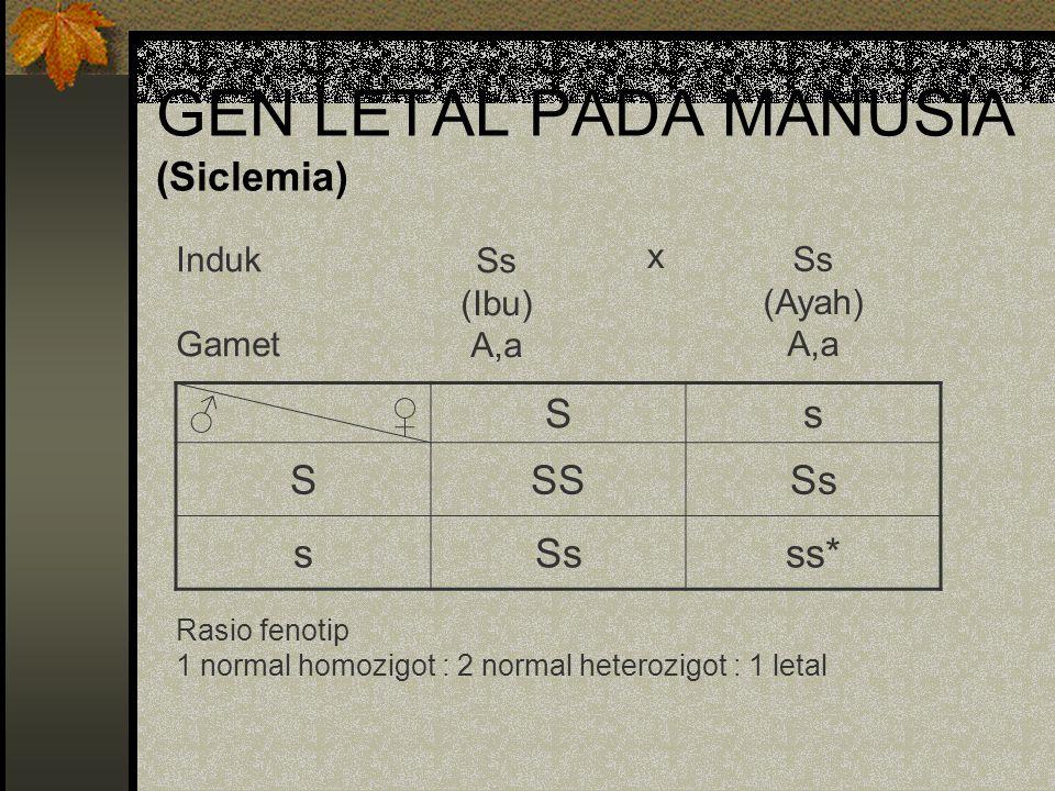 GEN LETAL PADA MANUSIA (Siclemia)