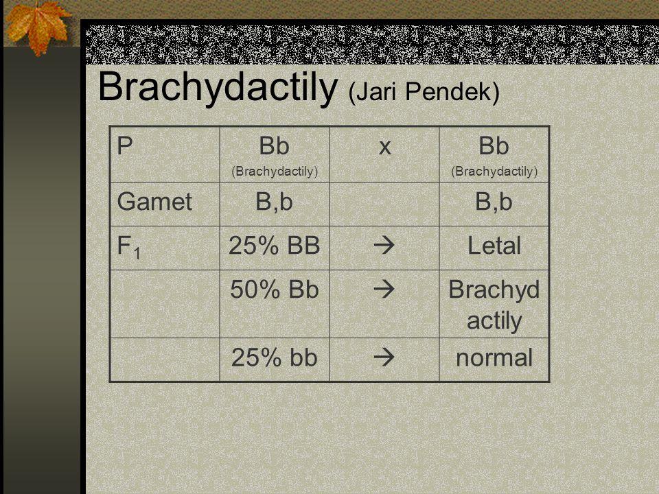 Brachydactily (Jari Pendek)