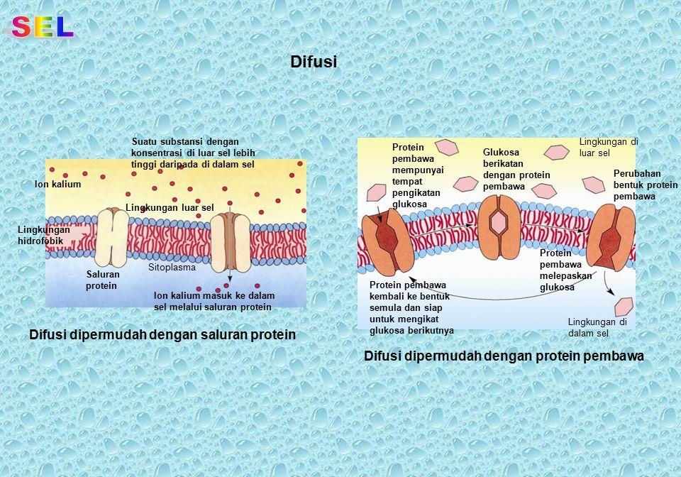 SEL Difusi Difusi dipermudah dengan saluran protein